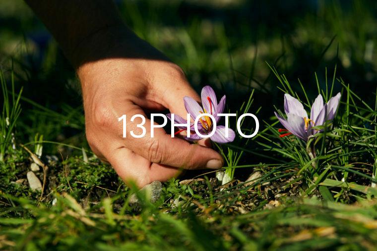 Saffron producers